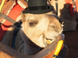 Chester the camel with my hat