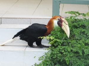 Kokomo Bird... so cute when they jump.