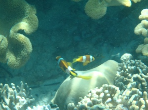 Clown fish everywhere!