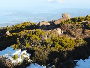 Glorious alpine vegetation on Mt Wellington